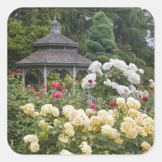 の開花および望楼のバラ園のバラ スクエアシール