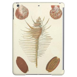 の5親切な貝殻
