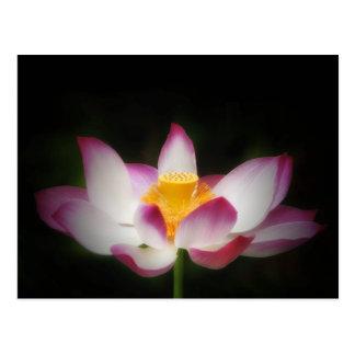 はすの花の写真撮影の素晴らしいヨガOmのギフト! L ポストカード