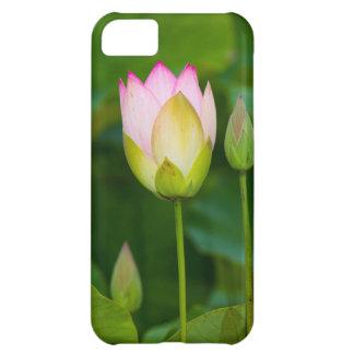 はすの花の箱 iPhone5Cケース