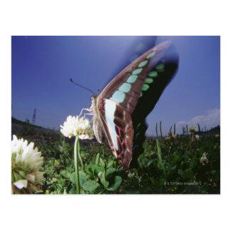 はためく花の蝶のクローズアップは飛びます ポストカード