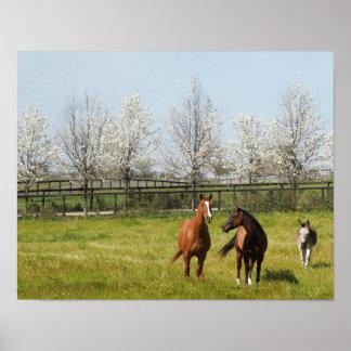 ばか騒ぎ: 春の2頭の馬そしてろば ポスター