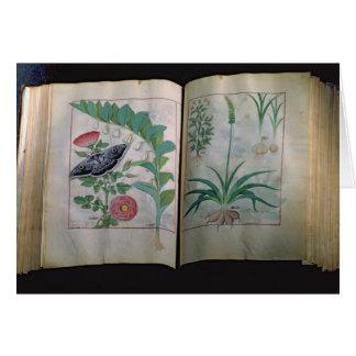 ばら色2基のページの描写およびニンニク カード
