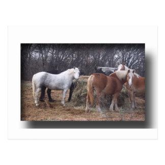 ばん馬の食べること ポストカード