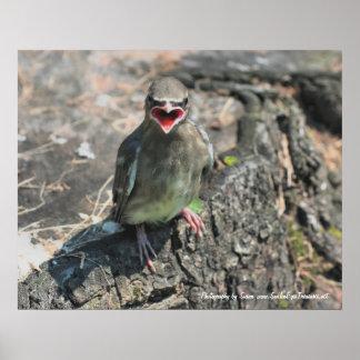 ひな鳥の自然の写真撮影ポスタープリント プリント