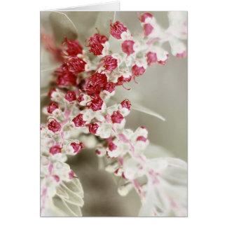 ほとんど開花で カード