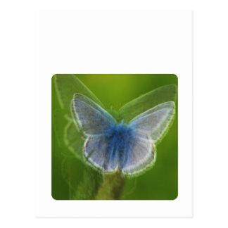 ぼやけられるアドニスの青い蝶 ポストカード