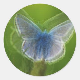 ぼやけられるアドニスの青い蝶 ラウンドシール