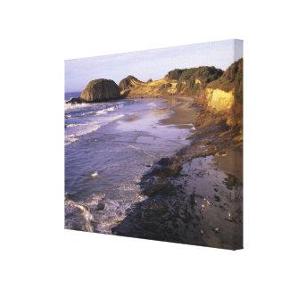 または、オレゴンの海岸、ニューポートのシールの海岸線 キャンバスプリント