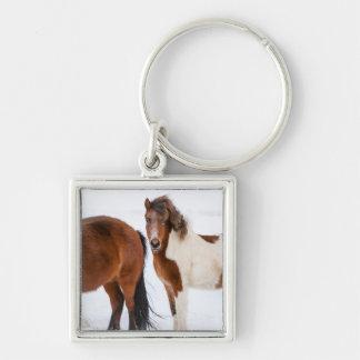 まだら馬によって着色されるアイスランドの馬 キーホルダー