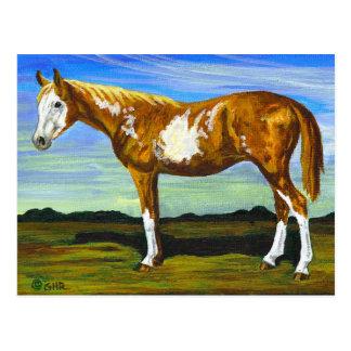 まだら馬またはペンキの馬の郵便はがき ポストカード