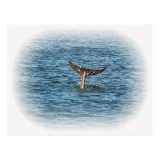 まっすぐのイルカの尾 ポストカード