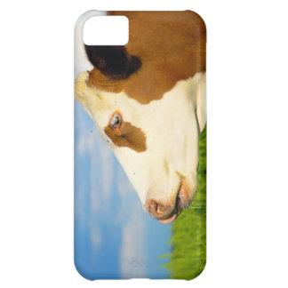 まっすぐ前に見ているブラウンの白い牛。 iPhone5Cケース