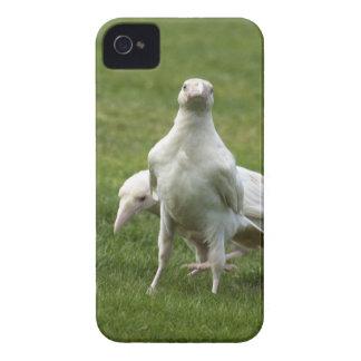 まれで白いワタリガラスのカラスの野生の鳥 Case-Mate iPhone 4 ケース