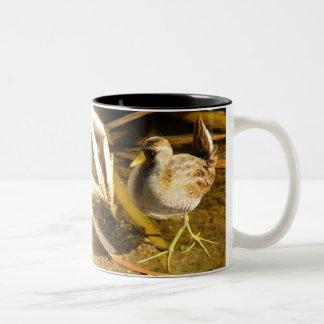まれなソーラの鳥のマグ ツートーンマグカップ