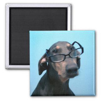 めがねの磁石を持つ青いドーベルマン犬 マグネット
