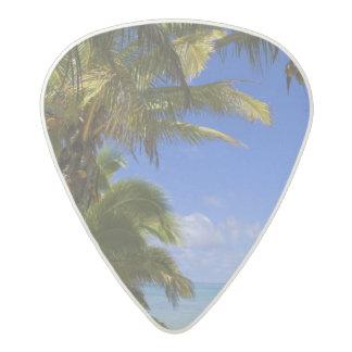 やしによって並べられるビーチのクック諸島2 アセタール ギターピック