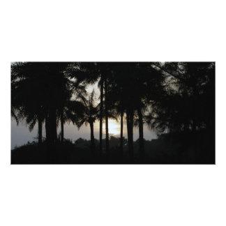 やし森林の日没 カード