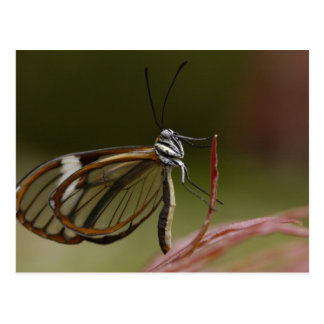ゆとり飛んだ蝶Hyalurga spのか。)雲2 ポストカード
