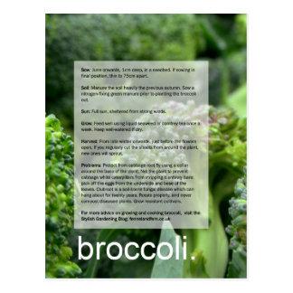 よい成長するガイド: ブロッコリーおよびラディッシュ ポストカード