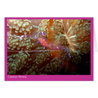 よりきれいなエビのギフトカード- 01 -ピンク カード