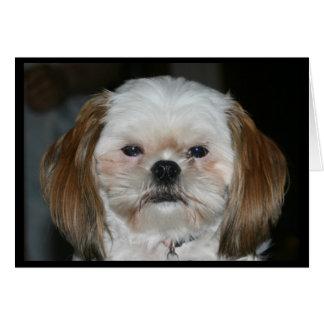 よりよいシーズー(犬) Tzuは私のバレンタインです! グリーティングカード