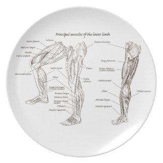 より低い肢の筋肉 プレート