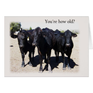 """より古い""""バースデー・カードを得ているユーモアのあるな牛"""" カード"""