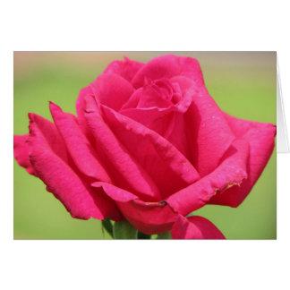 より甘いバラの臭い カード