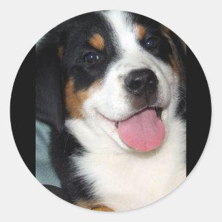 より素晴らしいスイス山犬の子犬 ラウンドシール