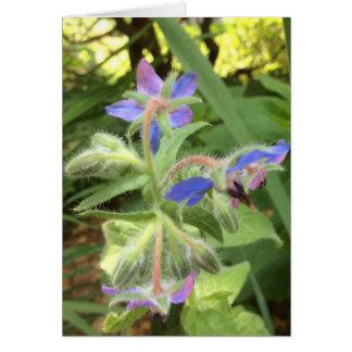 るりぢさの青いピンクの緑 --- カード