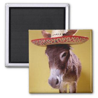 ろば(Equusのhemonius)の身に着けている麦わら帽子 マグネット