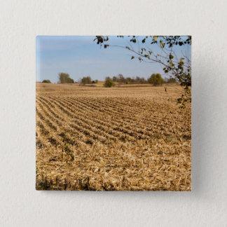 アイオワのとうもろこし畑のパノラマの写真 5.1CM 正方形バッジ