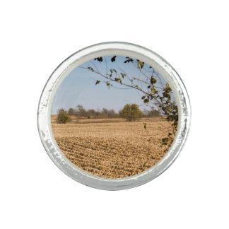 アイオワのとうもろこし畑のパノラマの写真v2 リング