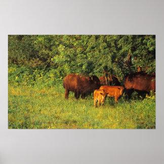 アイオワのネイルスミスNWRのバイソンの群れ ポスター