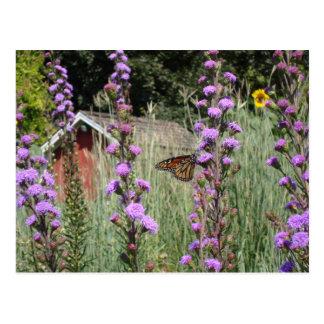 アイオワの草原の郵便はがきの(昆虫)オオカバマダラ、モナーク ポストカード