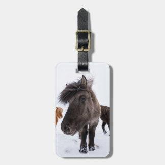 アイスランドの馬のポートレート、アイスランド ラゲッジタグ
