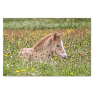 アイスランドの馬の子馬のティッシュペーパー 薄葉紙