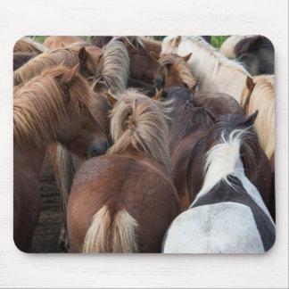 アイスランドの馬の群れ マウスパッド