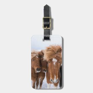 アイスランドの馬は、アイスランド寄り添います ラゲッジタグ