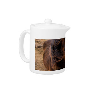 アイスランドの馬
