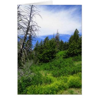 アイダホの荒野 カード