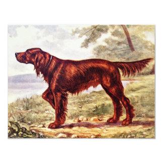 アイリッシュセッターのスポーツのな犬の1900年のイラストレーション カード
