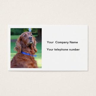 アイリッシュセッター犬の写真のカスタムな名刺 名刺