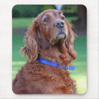 アイリッシュセッター犬の美しい写真のポートレート、ギフト マウスパッド