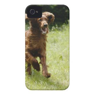 アイリッシュセッター Case-Mate iPhone 4 ケース