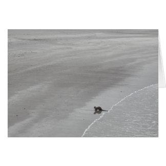 アイルランドのビーチのカワウソ カード