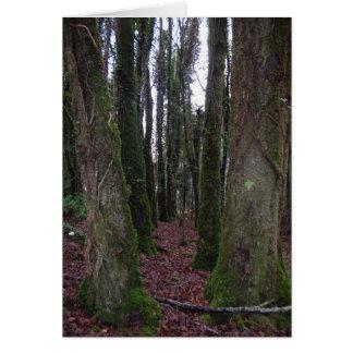 アイルランドの森林 カード