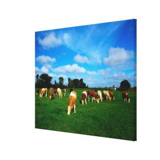 アイルランドの牧草を食べている牛の群れ キャンバスプリント