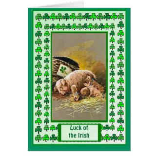アイルランドの運、豚のようおよびコブタ カード